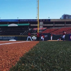 buffalo bisons field